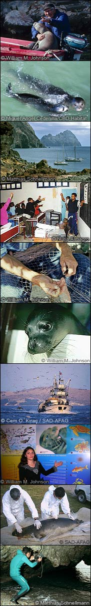 Facets of monk seal conservation