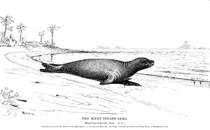 the west indian seal by H.W. Elliott